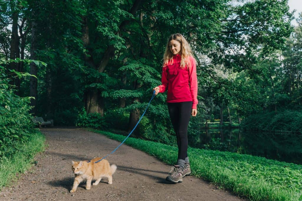 A young girl with dirty blonde hair wearing a red, long sleeve shirt, black pants, grey socks, and brownish shoes. She is walking a cat using a cat harness and leash. The cat she is walking is a yellow cat with white patches in what seems like a park. They are on a walking path sounded by green grass, trees, and a small pond on the right side.