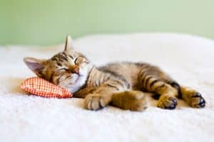A light tan kitten with black stripes sleeping on a white blanket using a red and white checkered mini pillow.