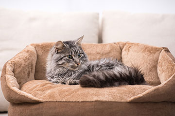 Grey fluffy cat lying down on a brown cat bed.