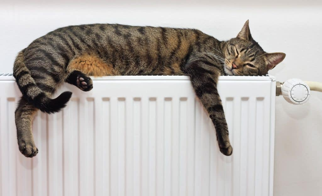 A grey cat with black strips and light brown batches is sleeping on the top of a white radiator.