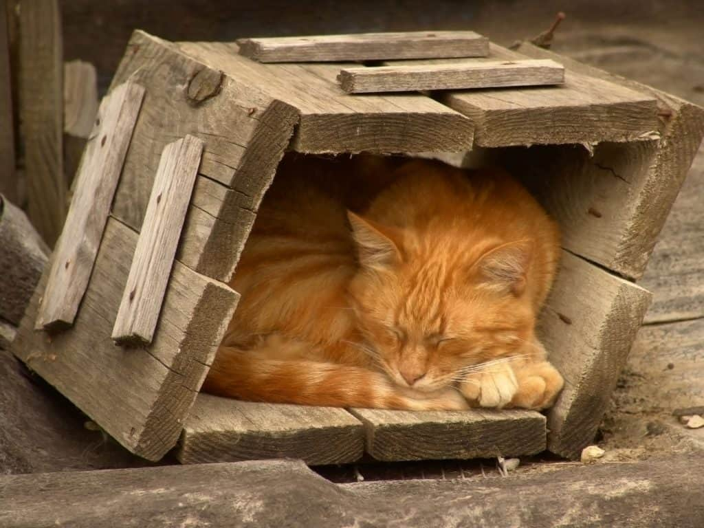 A yellow cat with white stripes sleeping in an enclosed wooden box, with only the front missing a panel, so we can see the cat sleeping in it.