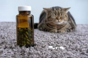A dark brown, plastic bottle with a white cap and light green/dark green capsules inside, standing up on a grey carpet. There is also a grey cat with black stripes closing its eyes in the background. There is some white pills or possibly a cover next to the medicine bottle.