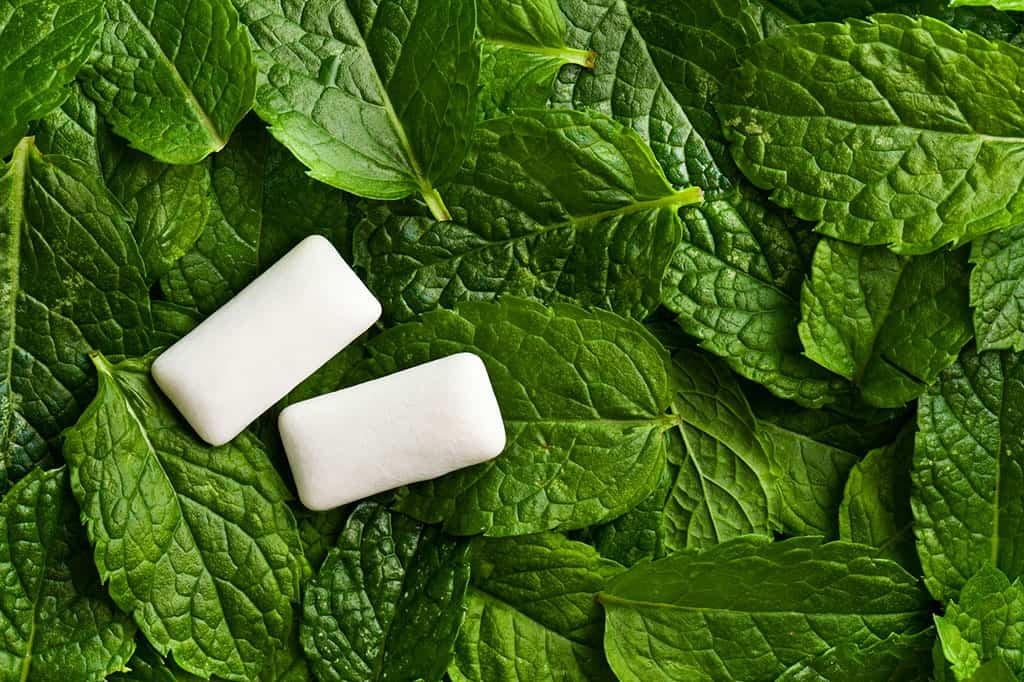 A close-up shot of green mint leaves with two pieces of white, rectangular pieces of gum on top (on the left).