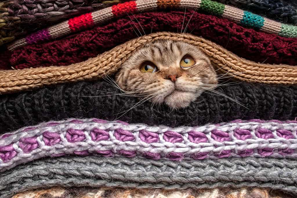 A grey, brownish cat with black stripes under a pile of fabric or clothes, with only his face sticking out.
