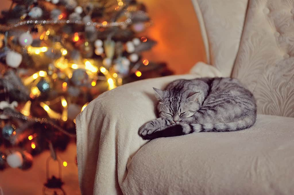 A grey cat with black stripes sleeping at the arm of a light tan-ish chair. There is a blurry image of a lit-up Christmas tree in the background.