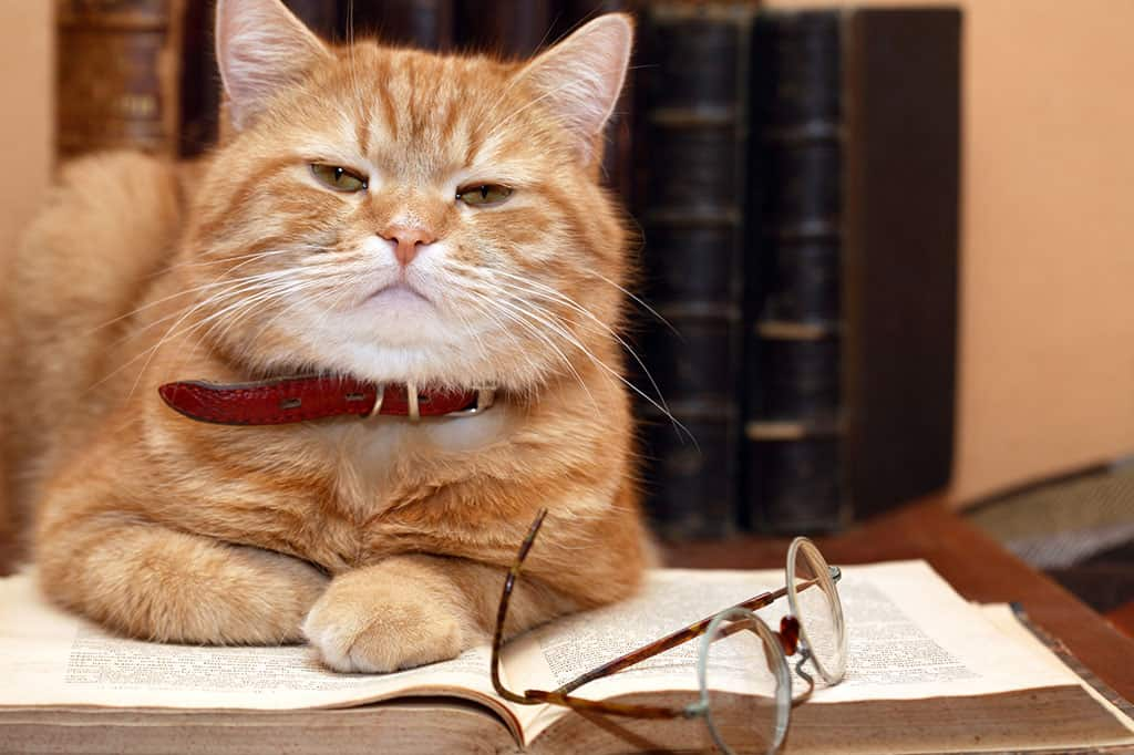 A older, yellow and white cat sitting on top of an open book with reading glasses on top of the book.
