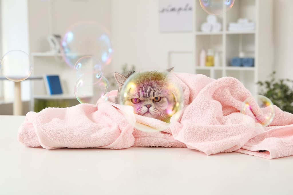 A grey cat with black stripes lying on a pink towel which is on top of a countertop. There are bubbles floating in the air, and one bubble is directly in front of the cat's face. We see that cat's face through this transparent floating bubble.