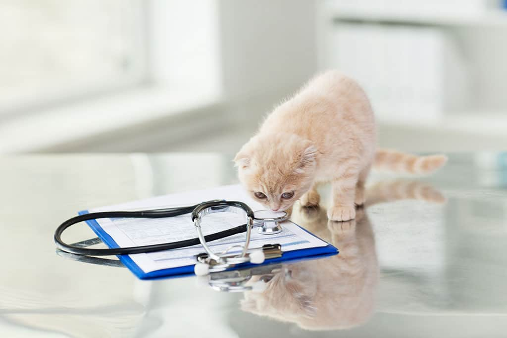 A small tan and white kitten sniffing a stethoscope on top of a clipboard, both of which are on a table.