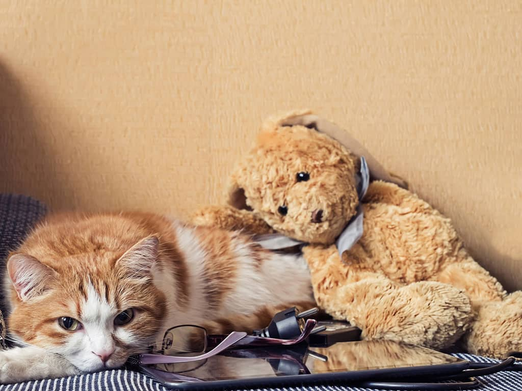 A light brown and white cat lying down, looking tired. A brown teddy bear is on top of the cat's back.
