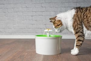 A white, brownish cat with black stripes examining a white and green water fountain on the floor.