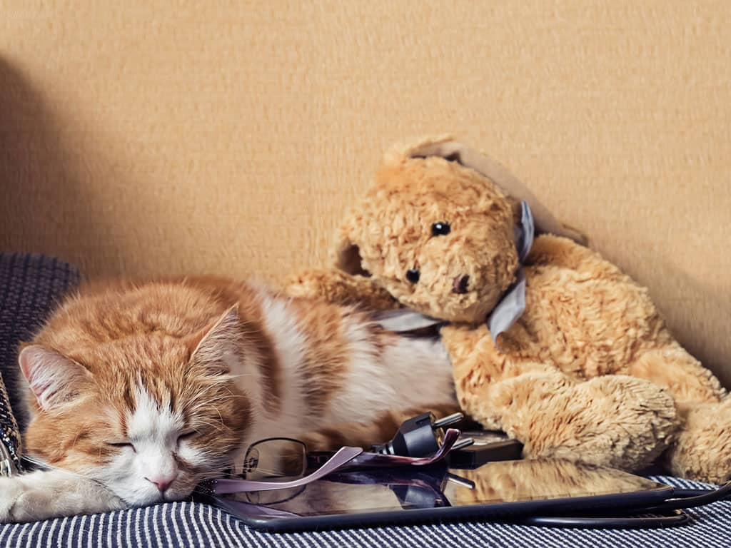 A light brown and white cat lying down on a blue and white blanket, looking very tired. There is a small, brown stuffed animal bear leaning against the cat and a black smart table next to the sleeping cat.