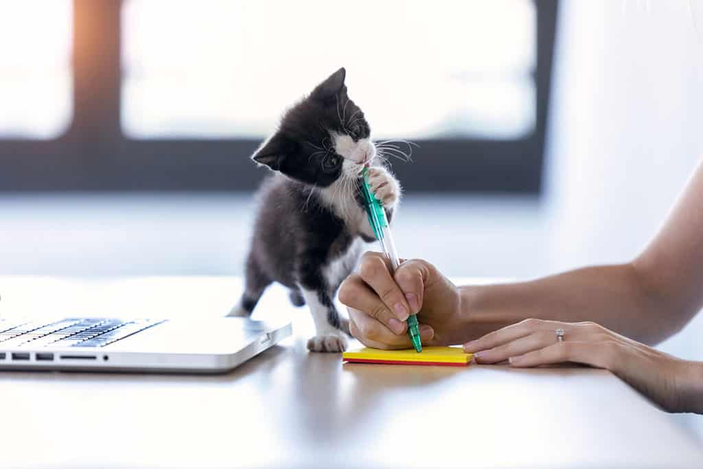 A cute black and white kitten on top on a desk biting at a pen that is being held by a woman who is trying to write something on a piece of yellow paper.