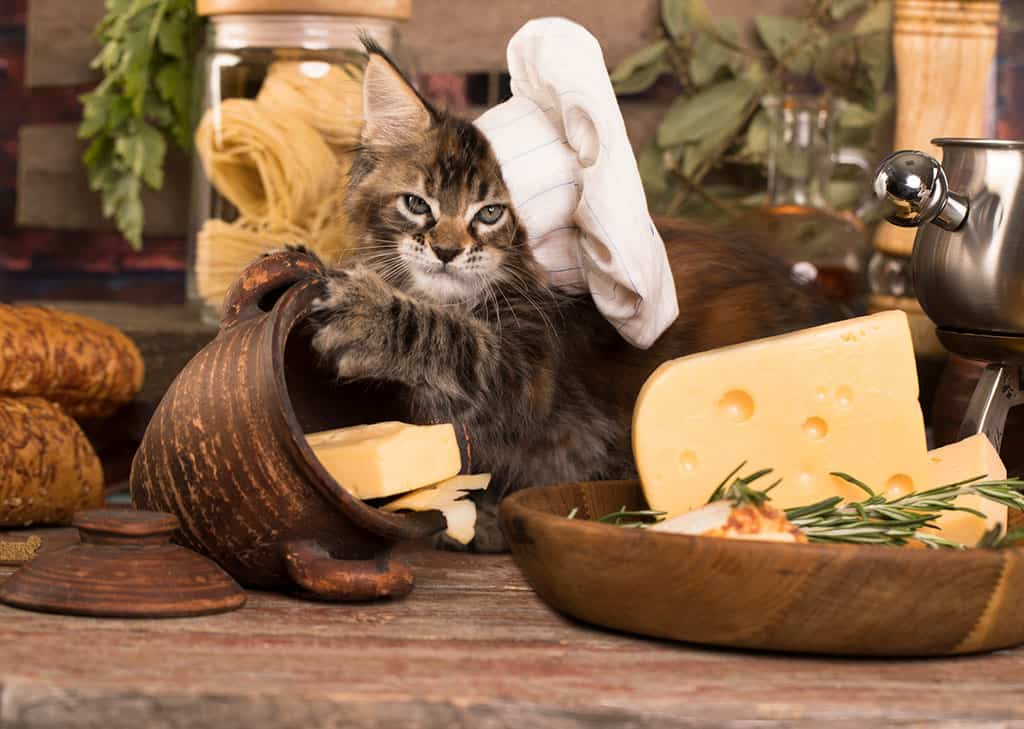 A white, black, and white cat wearing a white chef's hat is lying down next to bowls of cheese on a countertop.