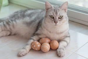 A grey and white cat is lying down, with 4 decorated (brown and white) eggs between its front legs.