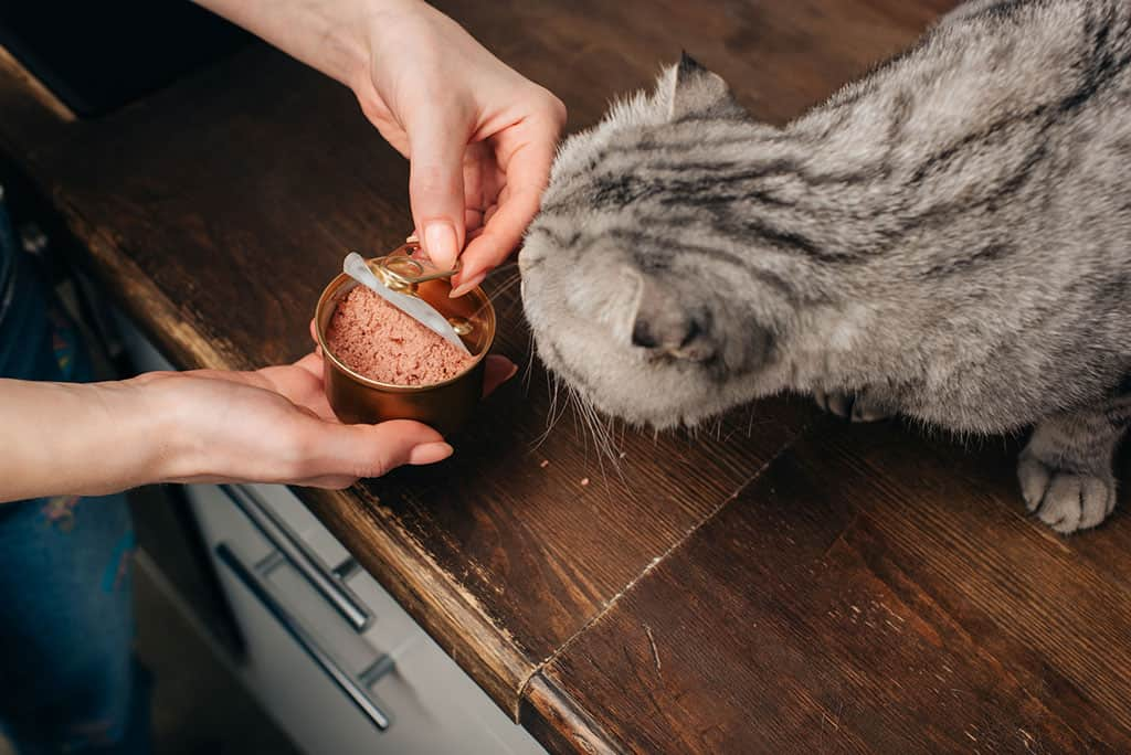 A woman's hand can be seen opening up a can of cat food while a grey cat with black stripes looks on.